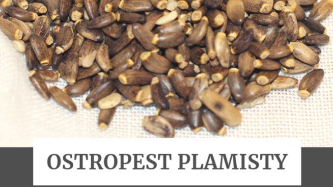 Ostropest plamisty - na ratunek wątrobie